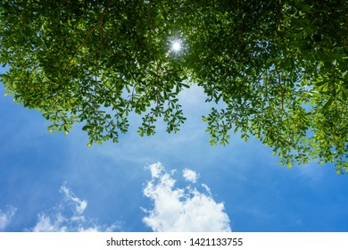 Avoid the sun under big trees in summer, The sun shines through the leaves of tree in summer with bright blue sky cloud.