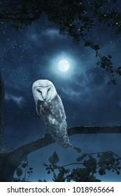awakening owl sitting on tree illuminated by bright moonlight