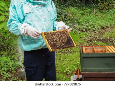 Awax frame of bees being held by the beekeeper close to the opened hive