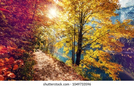 Awesome alpine forest in sunny day. Scenic image of fairy-tale woodland in sunlit. Touristic footpath under Colorful foliage in the autumn park in Austrian Alps. near Gosausee lake. Autumn Background.