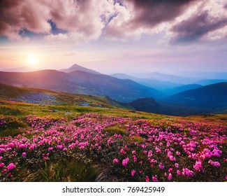Awesome alpine valley in warm light. Location Carpathian national park, Ukraine, Europe. Picture of a wild area. Scenic image of botanical concept. Violet toning effect. Discover the beauty of earth.