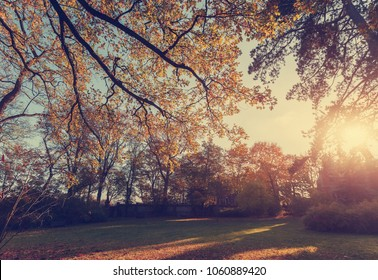 Awesome Autumn Background. Golden Leafes in the old trees in park. Amazing Natupal background in fall. Cteative image. instagram filter. Soft light effect. Magic forest in fantastic sunset.