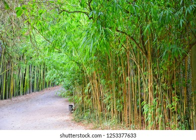 Awesome bamboo forest in the Botanical Garden of the University of Coimbra, Portugal. The garden was founded in 18th century and it is considered one of the most beautiful of Europe. Sep 4th 2018
