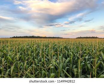 Awesome crop landscape in Brazil