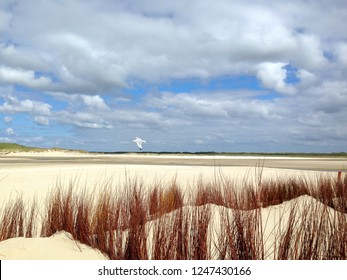 Awesome Dutch dunes. Texel, The Netherlands