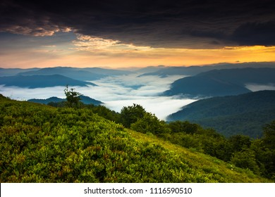 awesome foggy  summer image, trees on background mist and slopes carpathian mountains, fabulous panorama morning dawn, Ukraine, Europe, discover yourself beautiful places, wallpaper valley landscape