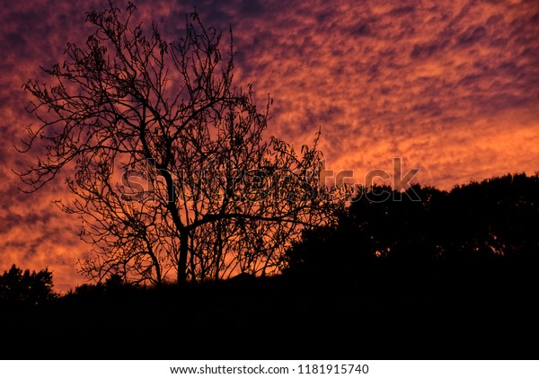Awesome red sky at sunset with silhouetted tree