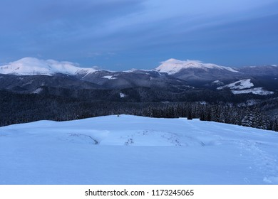 awesome snowy image, meadow and spruce forest on  background of famous mountains Goverla and Petros, attractive evening twilight, winter Carpathian mountains landscape, Kukul range, Ukraine, Europe