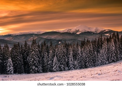 awesome snowy scenery  forest of firs on mountains background, magic morning dawn under dramatic wintry clouds sky, Carpathian mountains, Europe, trip around the world
