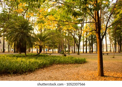 Awesome sunset by the lake at Ibirapuera Park, Sao Paulo, Brazil. Beautiful sunlight in the afternoon. Panoramic landscape, idyllic environment. Autumn colors, golden hour