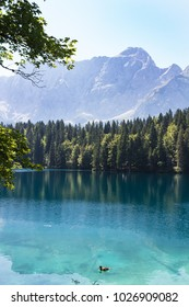 Awesome view of Lake Fusine park framed by fronds. Tarvisio, Italy
