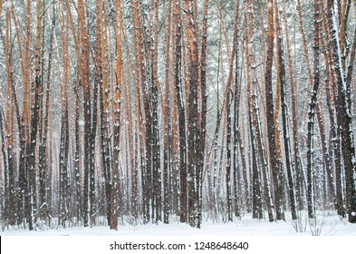 Awesome winter forest