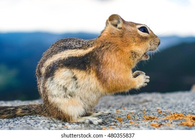 An awestruck mountain squirrel gazing at food