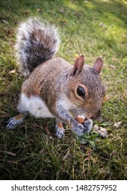 Awsome little squirell eating almond nut on the grass