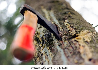 Ax chopped into a tree in the forest