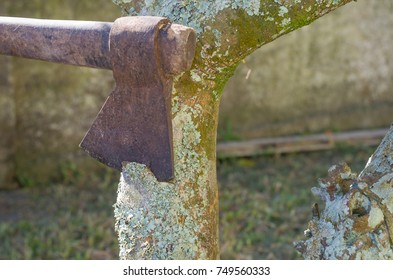Ax cutting tree with lichens close up.