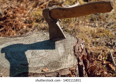 Ax stuck in the stump. wooden stump in the forest. Stump and ax in sunny weather. Deforestation man. Felled tree. Woodcutter's ax on the stump.