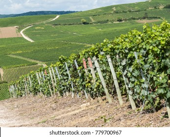 Ay, Champagne, France. Hills covered with vineyards in the wine region of Champagne, France. Moet & Chandon