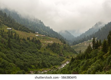 Ayder Plateau and Foggy Forest -Rize,Turkey
