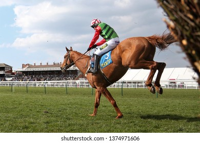 AYR RACECOURSE, AYRSHIRE, SCOTLAND, UK : 12 APRIL 2019 : Racehorse leap to the ground after jumping the last fence in front of packed Grandstands at Ayr Races