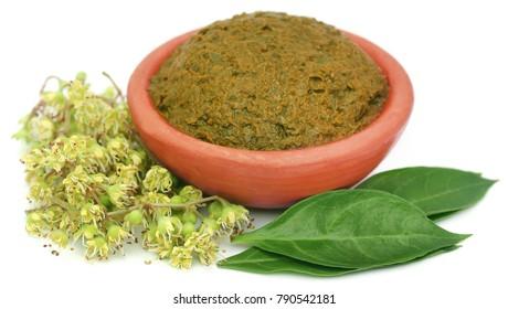 Ayurvedic henna leaves mashed and whole over white background