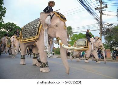 Ayutthaya, Thailand December 24, 2016 : White Eleven elephants to pay respect to late Thai king Bhumibol Adulyadej at Ayutthaya on December 24, 2016 in Ayutthaya, Thailand
