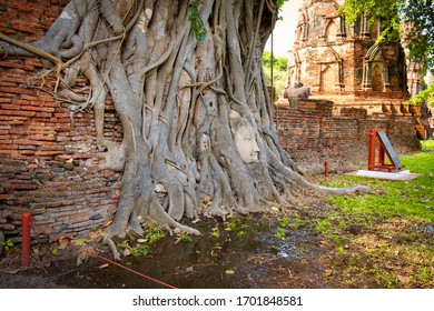 Ayutthaya, Thailand - January, 2020: Buddha Head statue with trapped in Bodhi Tree roots at Wat Maha That. Historical park Ayutthaya Thailand.