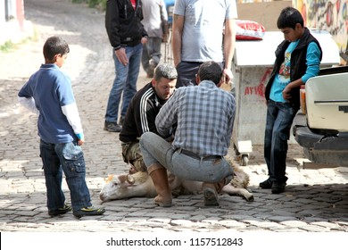 Ayvalik/Turkey - August 25 2017: sacrifice sheep, preparing to transport. This sheep will killed for sacrifice holday. Children looking to sheep sadly.
