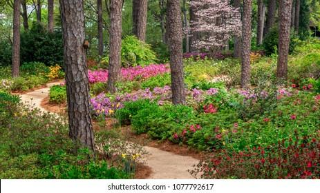 Azalea and Flower Garden pathway in Raleigh, North Carolina