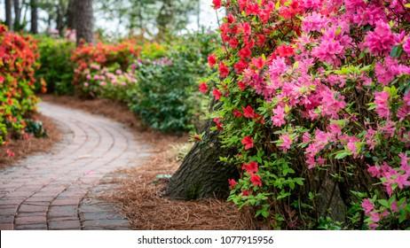 Azalea and Flower Garden in Raleigh, North Carolina