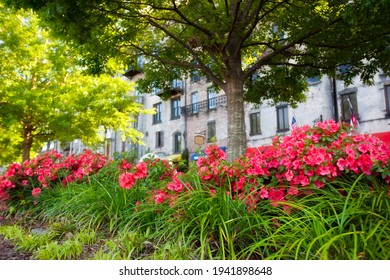 Des azalées fleurissent le long de l'historique River Street à Savannah, en Géorgie.