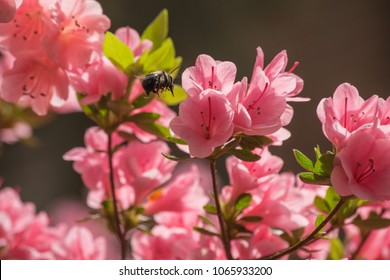 Azaleas flowers and other plants welcome in the spring and summer season, providing color in the garden. You backyard can be ready to showcase for your next party, picnic or entertaining opportunity.