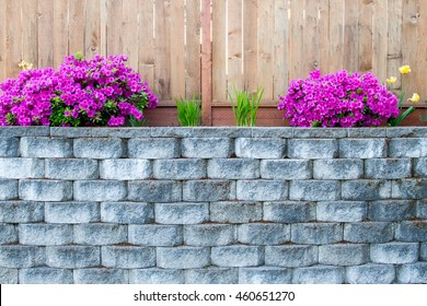 Azaleas on Retaining Wall with Fence