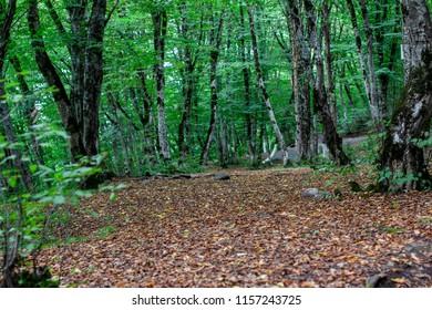 azerbaijan nature quba forest tree summer landscape seasen park wood