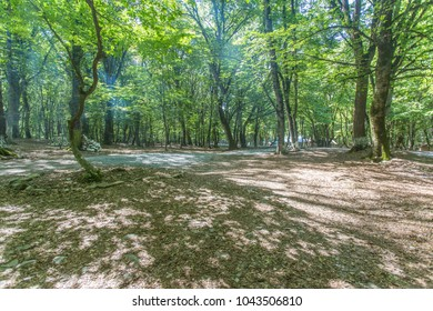 Azerbaijan qabala forest