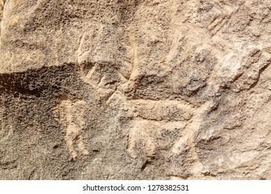 Azerbaijan, Qobustan. A petroglyph of an animal carved into a rock wall at Gobustan National Park.