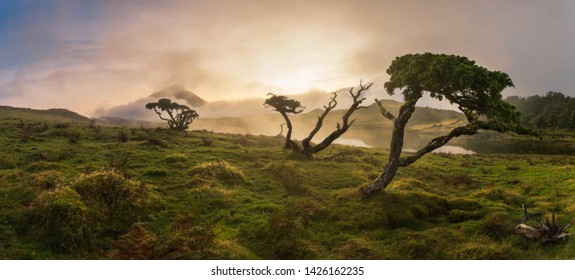 Azores Juniper tree Lagoa do Capitao against Clouds near Mount Pico, Sao Roque do Pico, Pico Island, Azores, Portugal