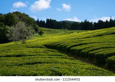 Azores Landscape Portugal