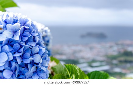 Azores, San Miguel, Hydrangea