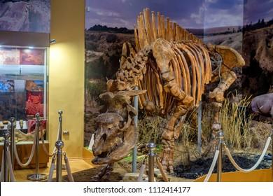 AZOV, RUSSIA - AUGUST 6, 2017: Skeleton of Elasmotherium in Azov museum, Russia