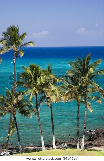 Azure Hawaiian Snorkeling Beach on Kona Island