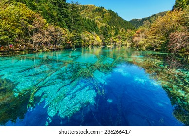 Azure lake with submerged tree trunks. Jiuzhaigou Valley was recognize by UNESCO as a World Heritage Site and a World Biosphere Reserve - China
