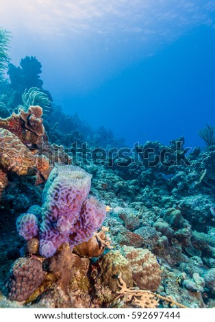 Azure Vase Sponge Callyspongia Plicifera Off Stock Photo Edit Now
