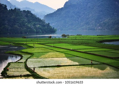 Ba Be, Vietnam - March 19, 2018: People working in the rice fields in the countryside of northern Vietnam. Credit: Dino Geromella/Shutterstock