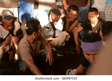 Babakan Panji village, Buleleng Regency, Bali/Indonesia – June 27, 2015: Men discuss cocks before fight during a cockfighting event