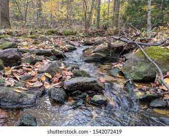 Babbling Brook cuts through a forest in autumn