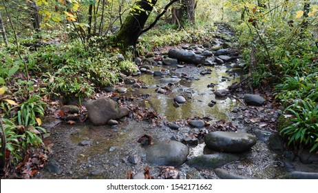 Babbling brook in the forest