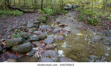 Babbling brook in forest downstream