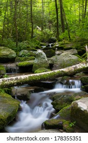 Babbling Brook in Green Forest With Fallen Tree