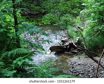 Babbling brook though thick foliage